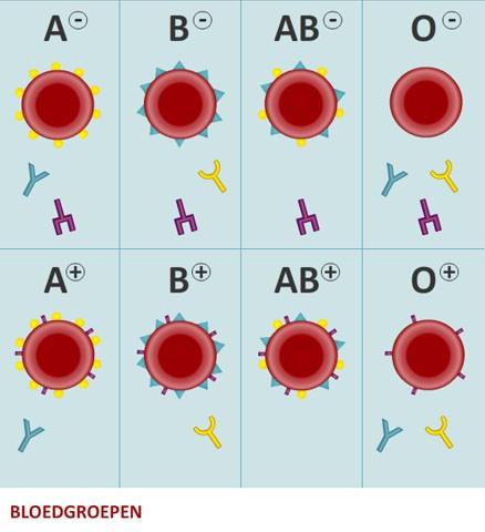 bloedgroep o recepten