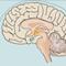 Thumbnail voor 'Hypofyse aandoeningen'